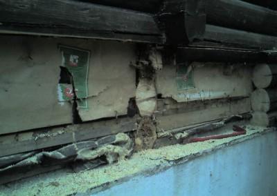 restaurering av tømmer ved råteskade – 14